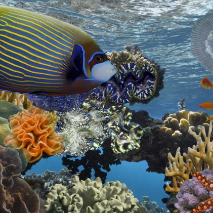 Underwater scene with coral reef and fish photographed in shallow water, Red Sea.